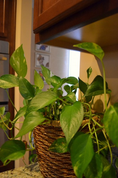 Indoor Plants That You Just Cant Kill
