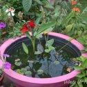 Tropical Container Water garden, Porch water garden