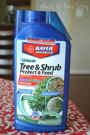 Whats Ur Home Story: Japanese Beetle control,