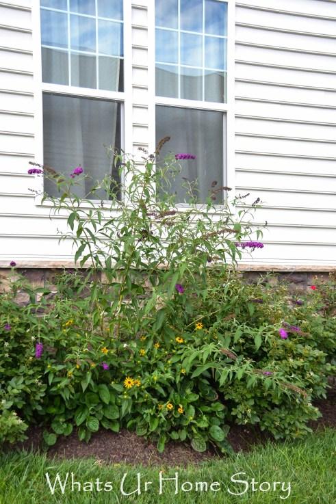 Summer Garden 2014