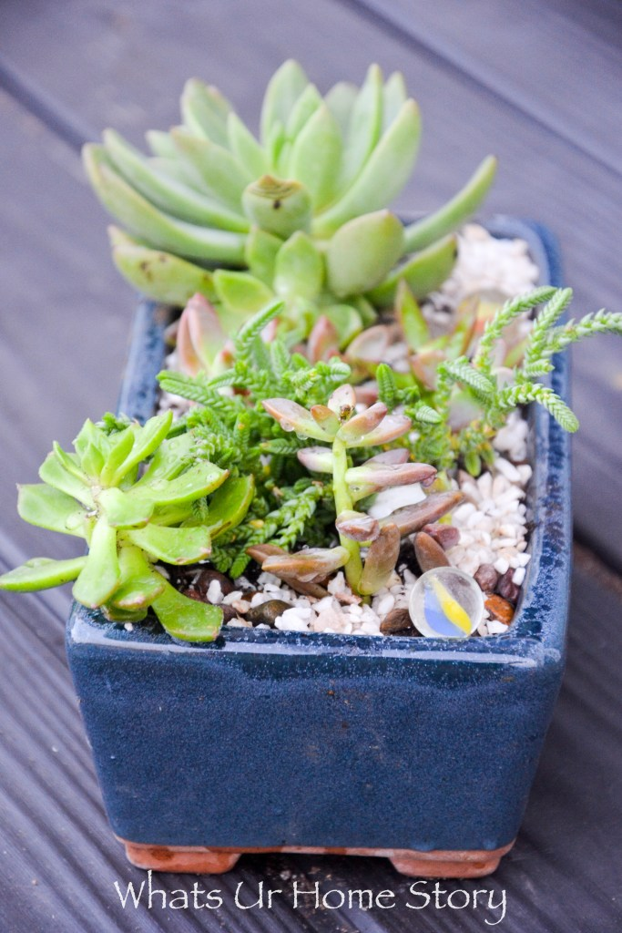 succulent planter using succuletns from the clearance section
