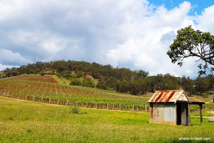 Vineyards on morning walk