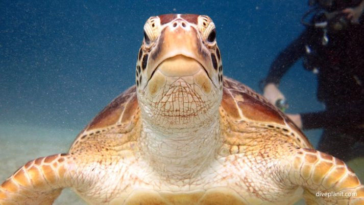 7674-Turtle-very-very-close-at-Club-Paradise-House-Reef-diving-Busuanga-Palawan-Philippines-DPI-7674