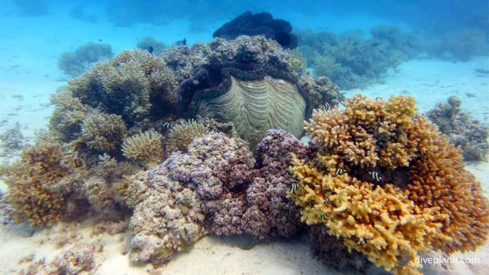 Underwater-scene-with-Giant-Clam-at-Aitutaki-Lagoon-diving-Cook-Islands