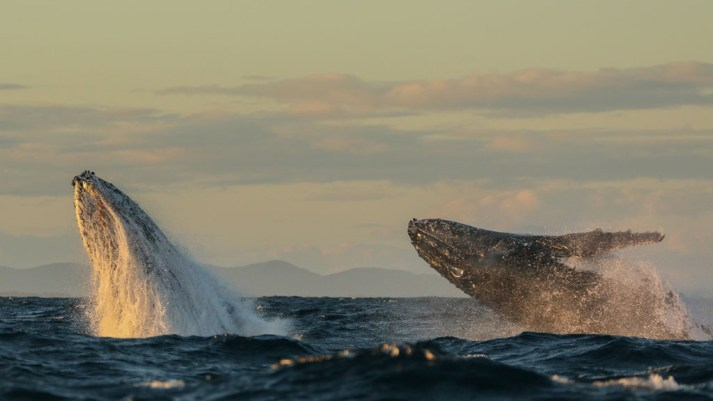 Port Stephens Whale watching credit Lisa Skelton