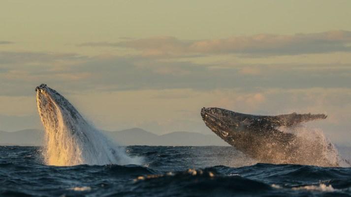 Port Stephens Whale watching credit Lisa Skelton