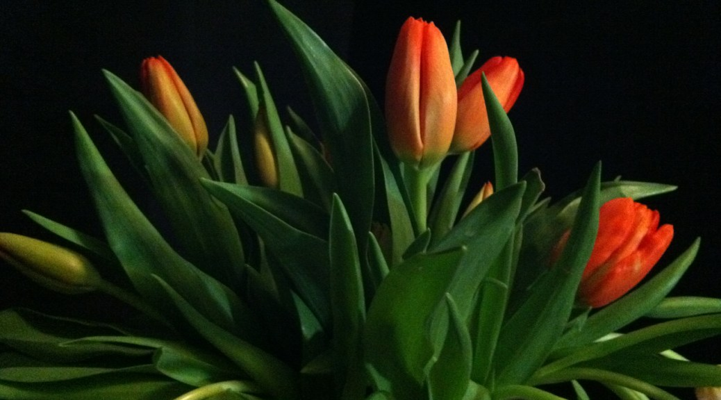 Tulips in Vase, Photo by Romi Cortier