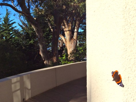 Butterfly at Coit Tower, San Francisco, Photo Romi Cortier