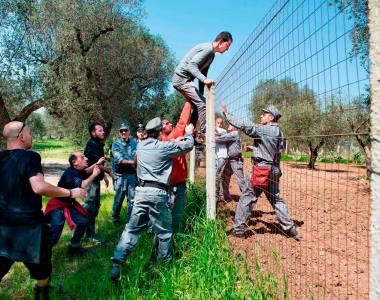 E' cominciata l'eradicazione degli ulivi in Salento