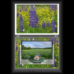 #2033 Lupines and Wildflowers Notecard