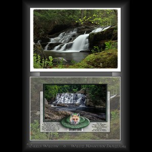 #2045 Rose Garland Falls Notecard