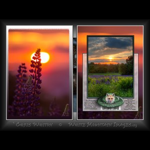 #2046 Sunset Lupine Bloom Notecard
