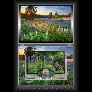 #2055 Purple Lupine Sunset Notecard