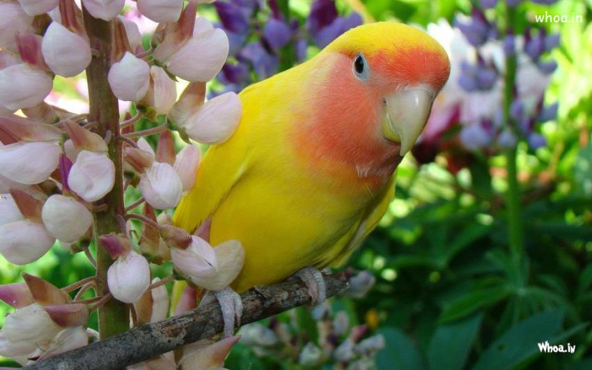 Yellow Bird Colorful Nature Hd Wallpaper