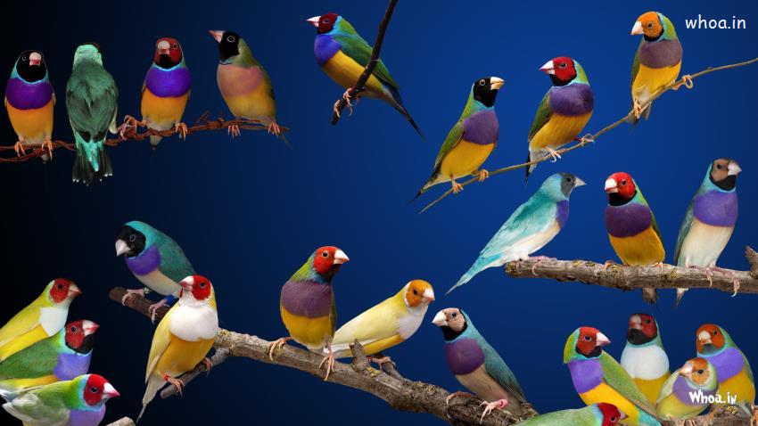 3d Hd Ganesh Wallpaper Colorful Bird Hd Wallpaper