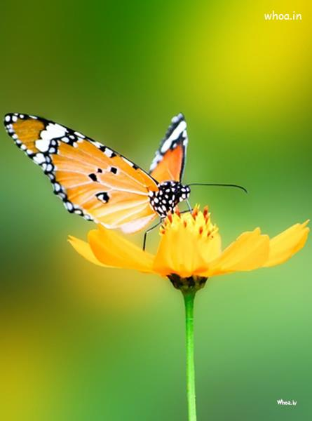Good Morning Beautiful Wallpapers With Quotes Natural Butterfly Image For Mobile