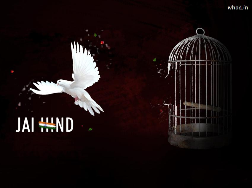 Indian Flag Animated Wallpaper 3d Independence Day Independent Bird Wallpaper
