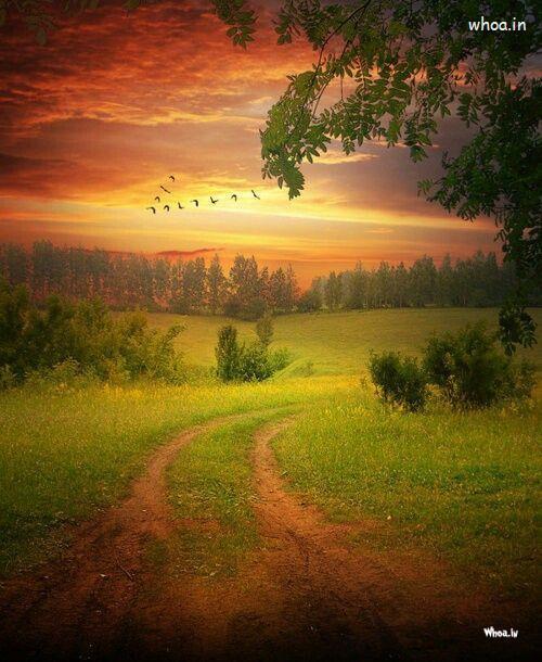 Om Sai Ram Wallpaper 3d Sunrise Natural Wallpaper With Birds