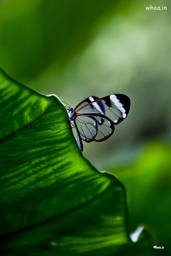Navratri Wallpaper With Quotes Butterfly Sitting On A Leaf Hd Wallpaper