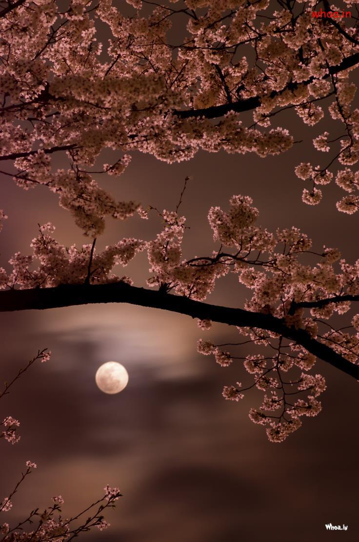 Sai Baba 3d Wallpaper Download Full Moon Natural Hd Wallpaper 5