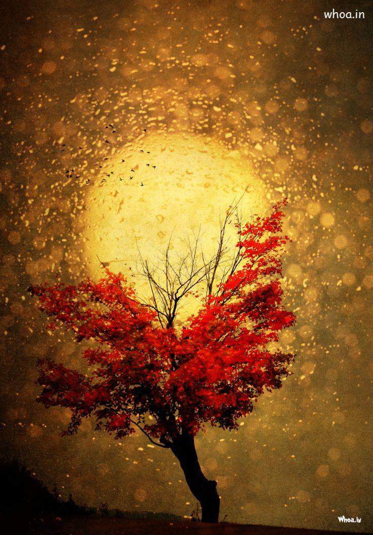 Happy Holi 3d Wallpapers Full Moon With Red Tree