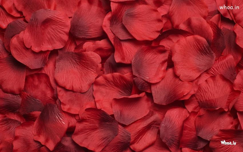 Sai Baba Hd Wallpapers 1366x768 Red Rose Leaf Desktop Base Wallpaper