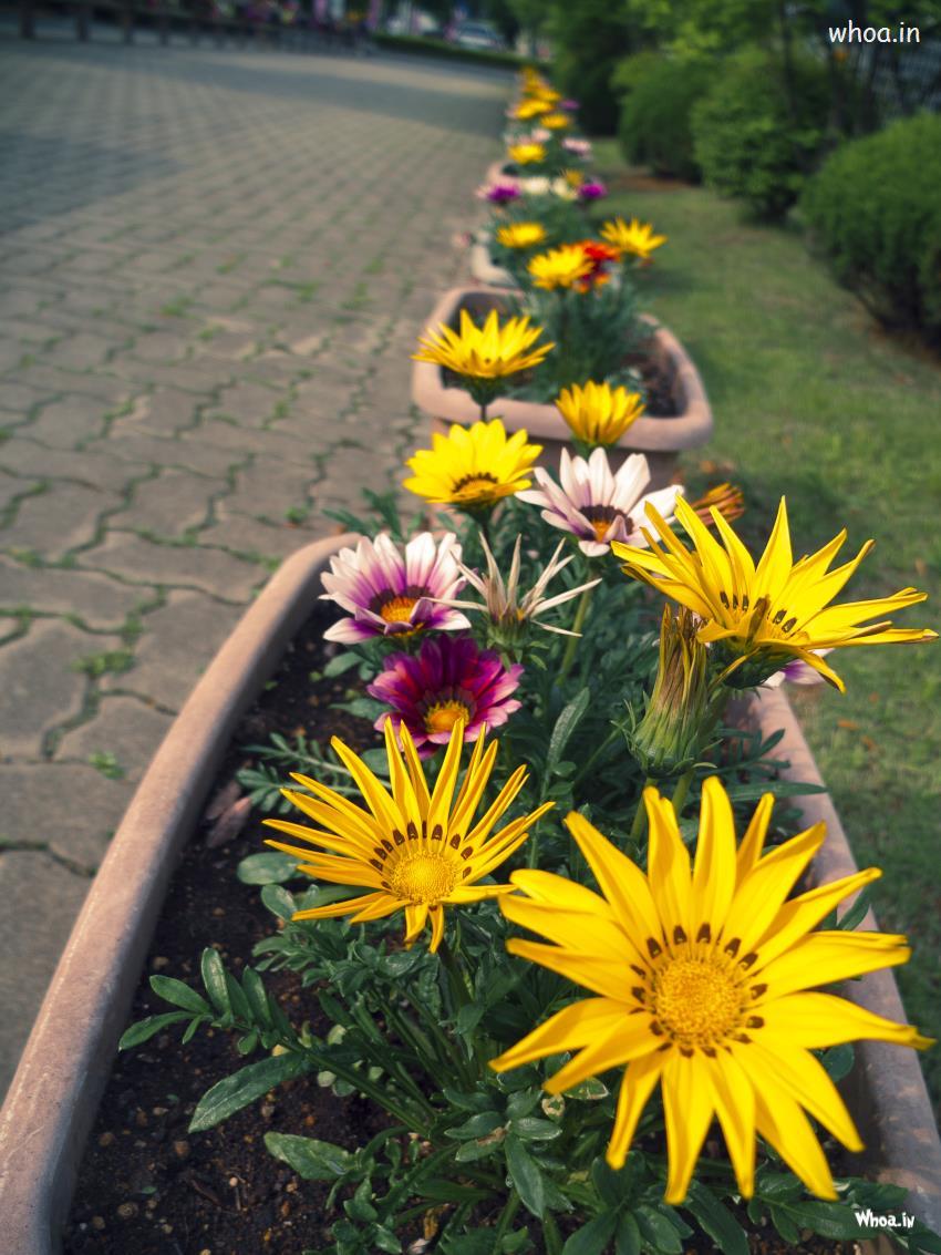 Krishna 3d Wallpaper For Mobile Diffrent Flowers In A Garden
