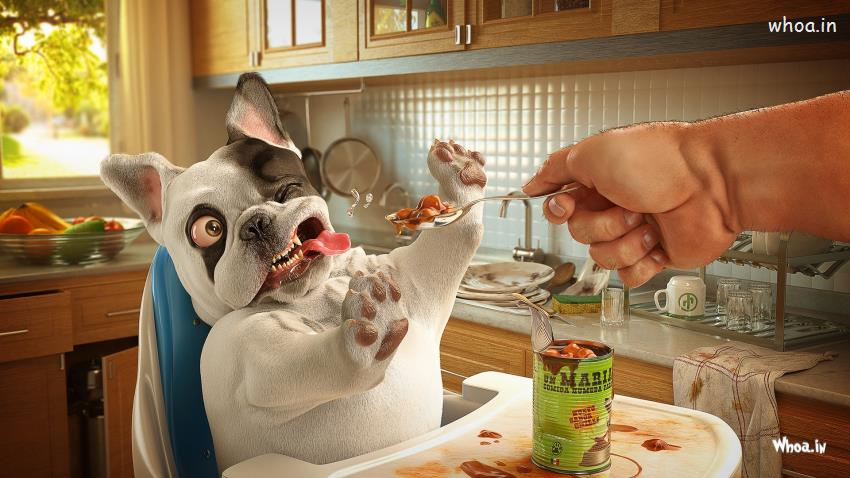 Shiva Animated Wallpaper Hd Dog Can T Eat Food With Funny Face Hd Wallpaper