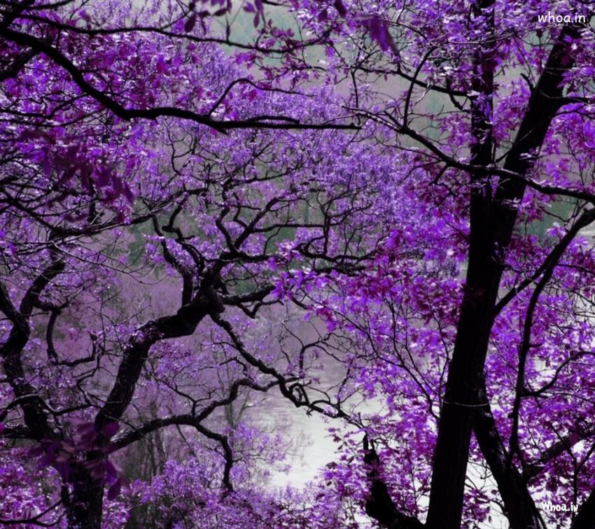 Sai Baba Animated Wallpaper For Pc Purple Flowers Tree Hd Wallpaper