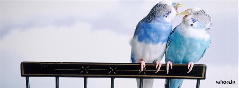 Friendship Quotes Desktop Wallpaper Blue Birds Budgie Facebook Cover