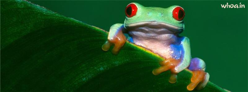 Cute Friendship Quotes Hd Wallpapers Red Eye Frog Facebook Cover