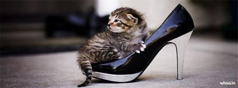 Cute Happy Teachers Day Wallpaper Funny Cat Kitten Facebook Cover 90