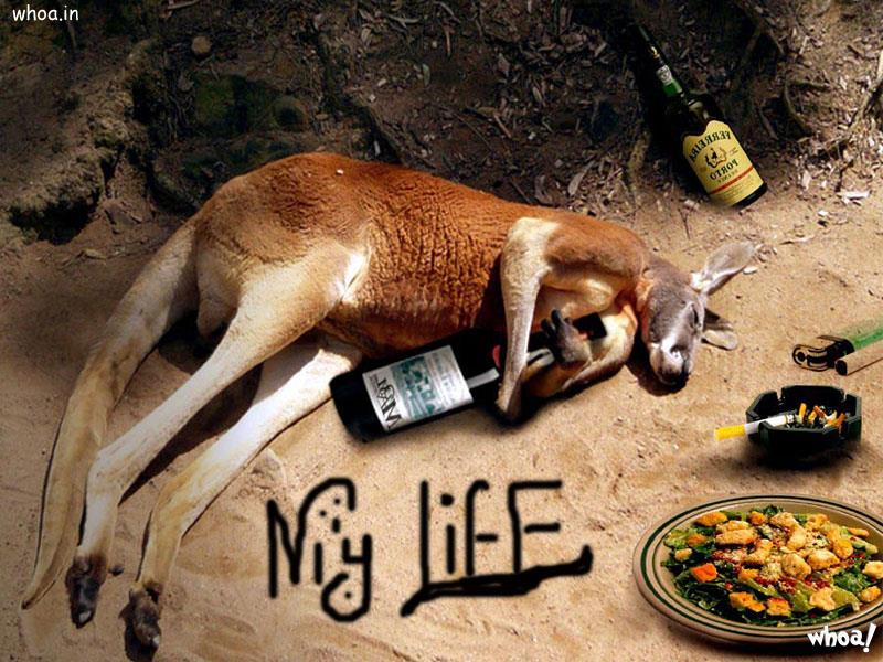 Apps For Quotes Wallpapers Funny Kangaroo Drunkar For Facebook Free Download