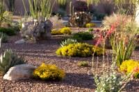 backyard desert landscape designs - Desert Landscaping ...