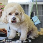 Factors to Consider When Choosing A New Dog