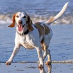 4 Common Health Issues with Dogs