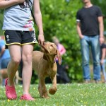 Tips to Keep in Mind When Traning A Dog