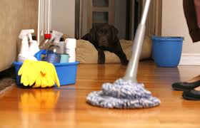 cleaningwithdog