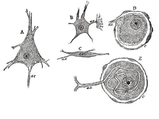 brain tissue diagram