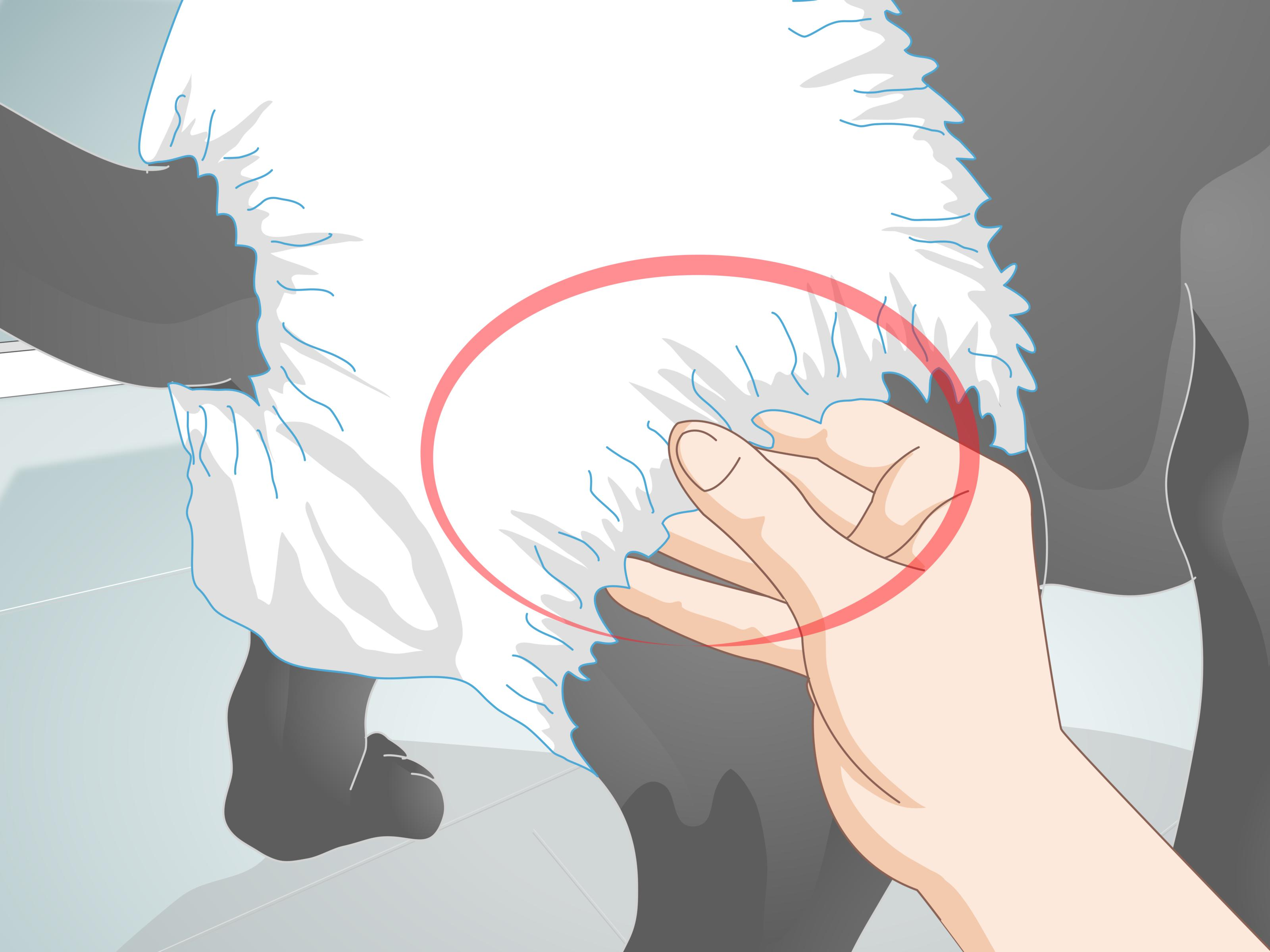 Animal House Wallpaper How To Buy Dog Diapers 11 Steps With Pictures Wikihow