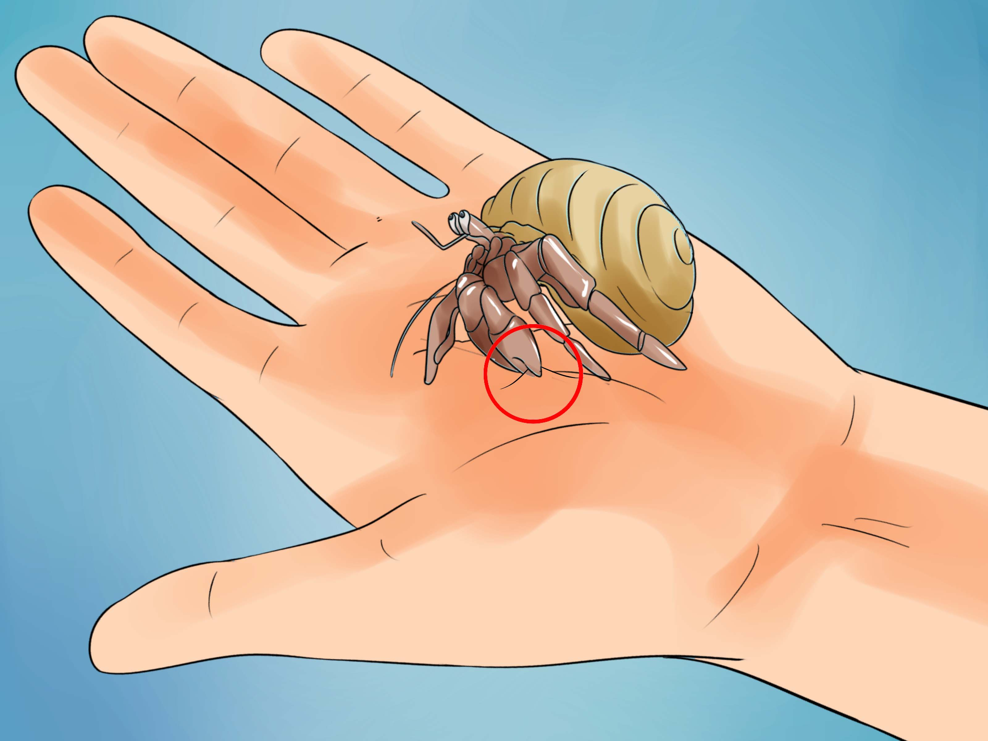 Falling Water House Wallpaper The Best Ways To Care For Hermit Crabs Wikihow