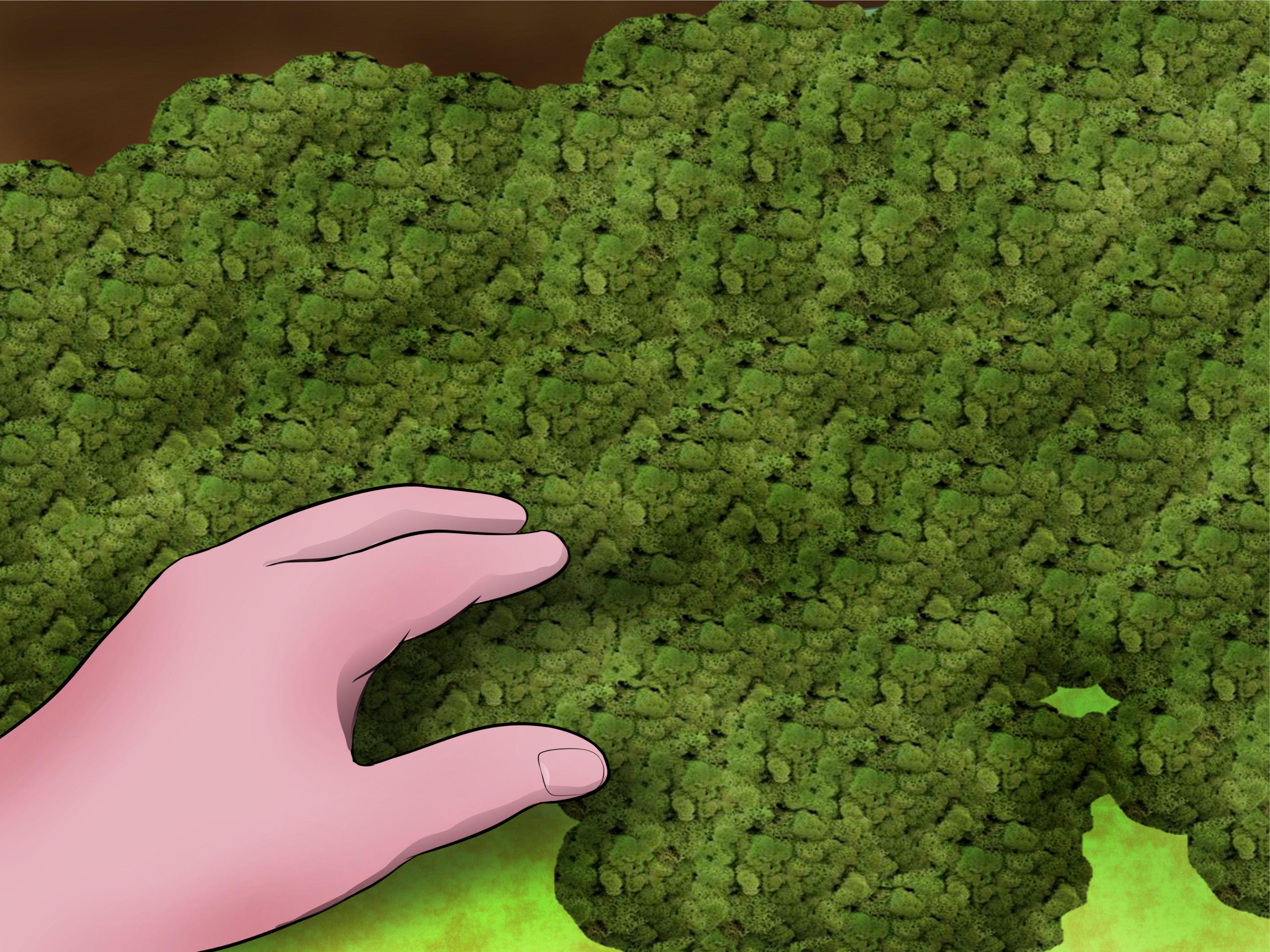 Live Moss Bathroom Carpet Carpet Vidalondon
