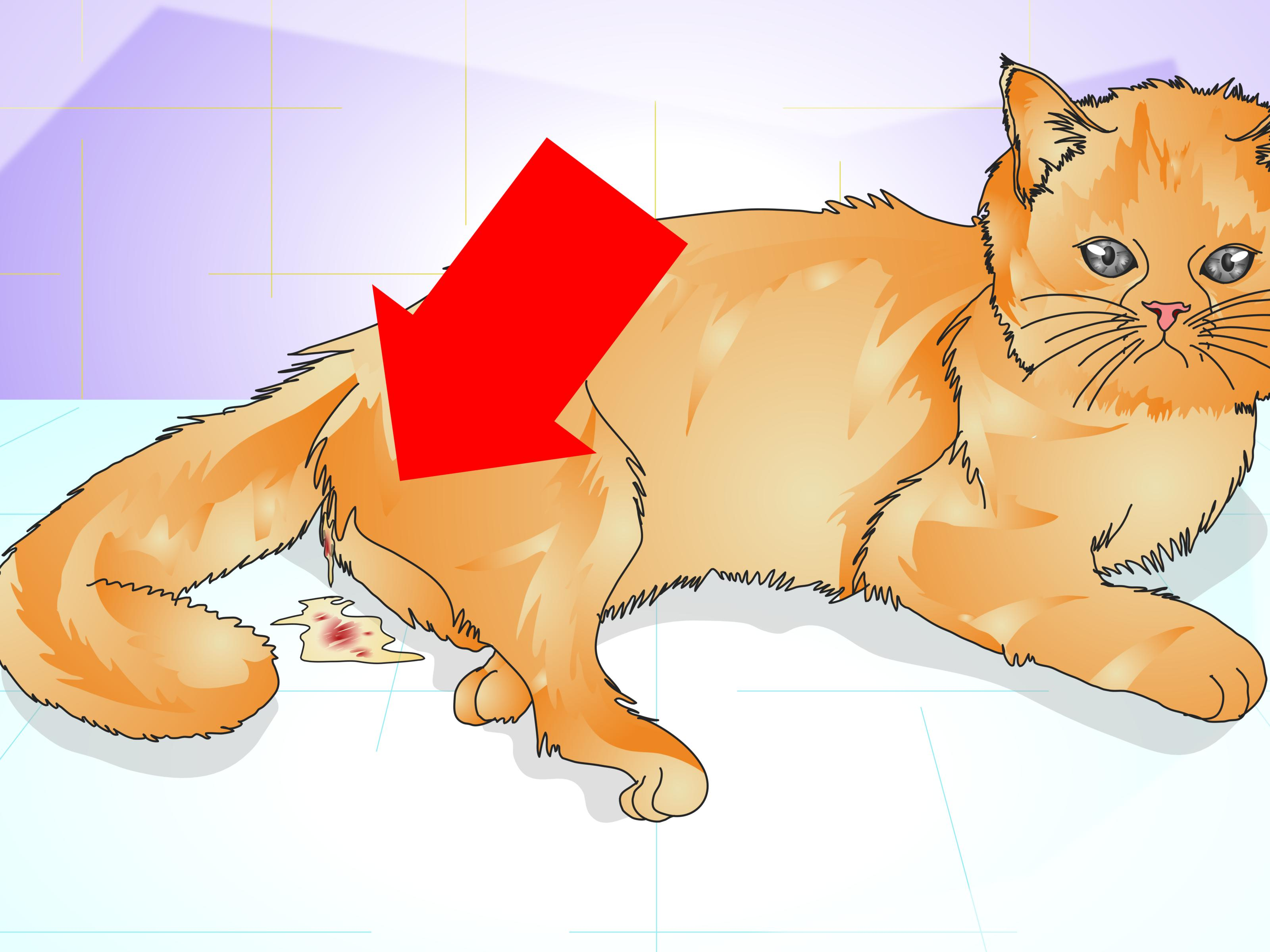 Fullsize Of Do Male Cats Have Nipples