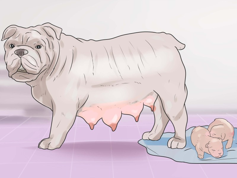 Large Of How To Make Dog Throw Up
