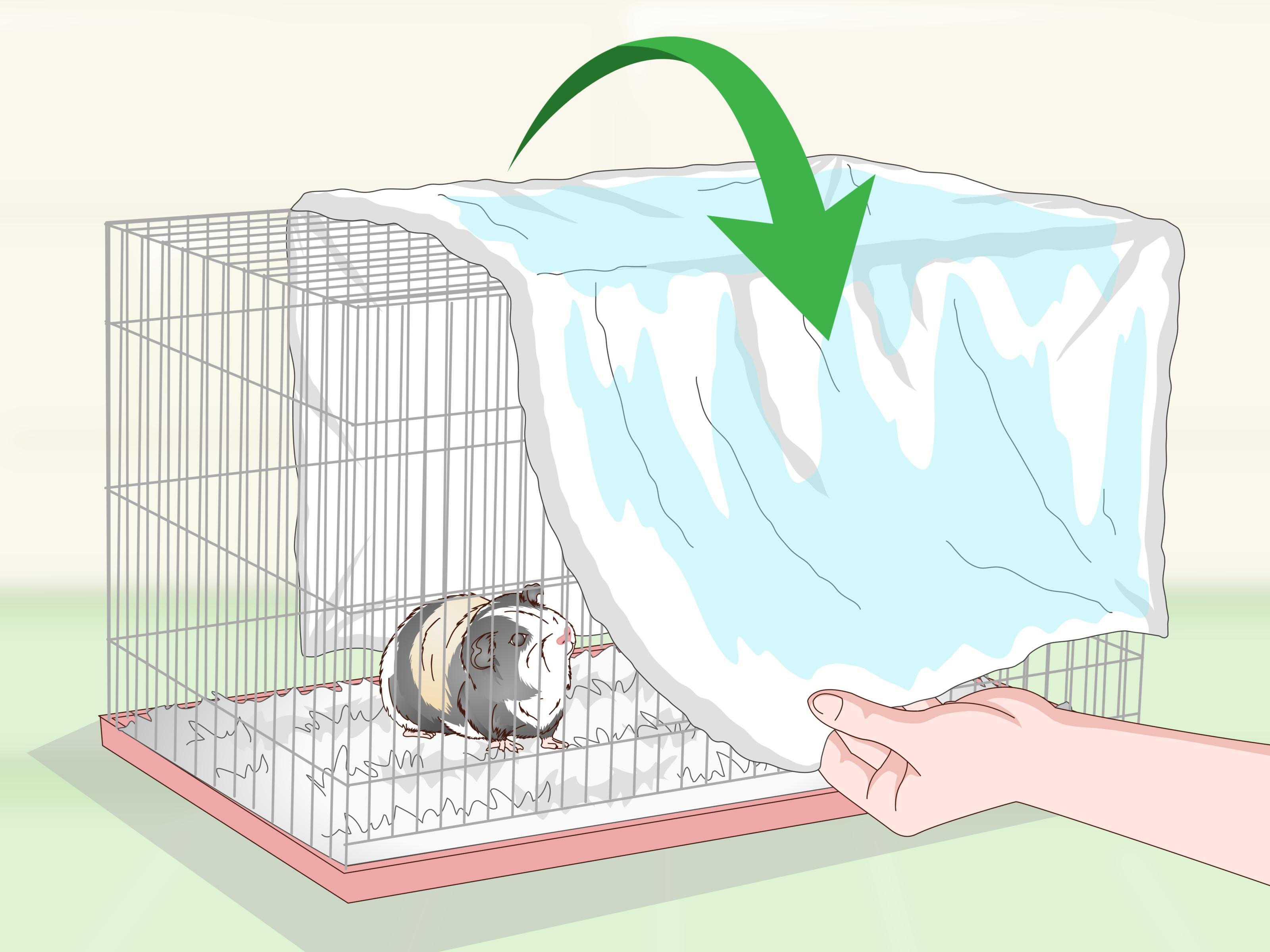 How To Keep Your Guinea Pig Cool In Hot Weather 13 Steps