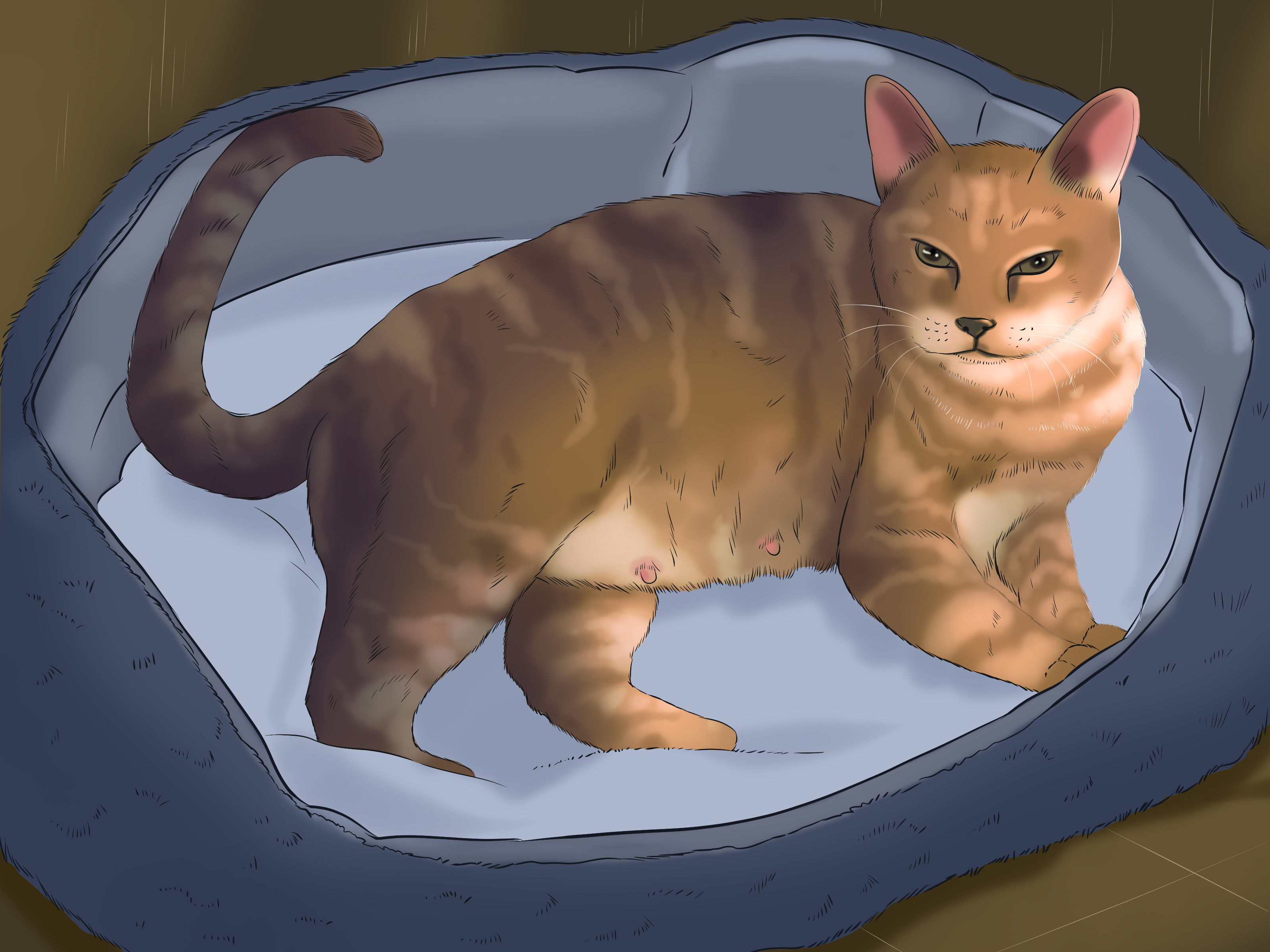 Wondrous Tell If A Cat Is Pregnant Step 12 Version 6 Does Male Cats Have 6 Nipples Do Male Cats Have Nipples bark post Do Male Cats Have Nipples