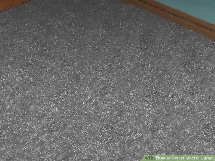 How To Check For Mold In Your Carpet Home Plan