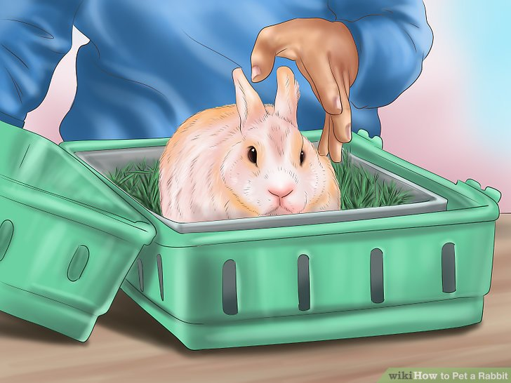 How to Pet a Rabbit 10 Steps (with Pictures) - wikiHow