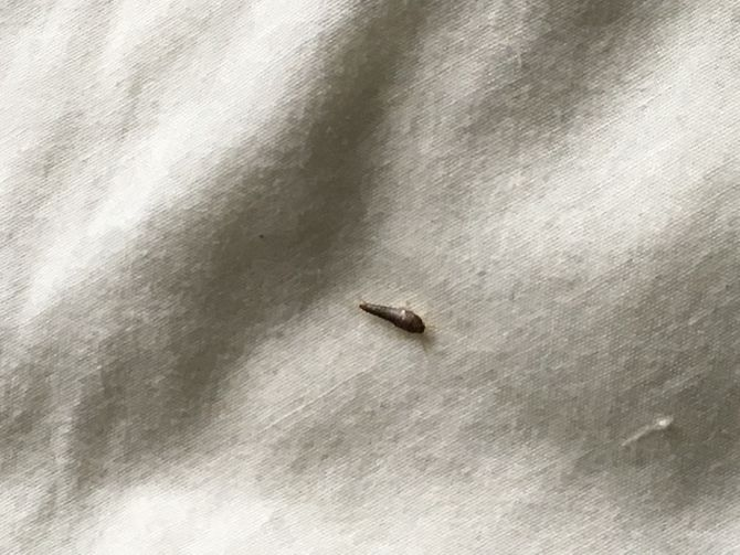 How To Get Rid Of Silverfish 14 Steps With Pictures