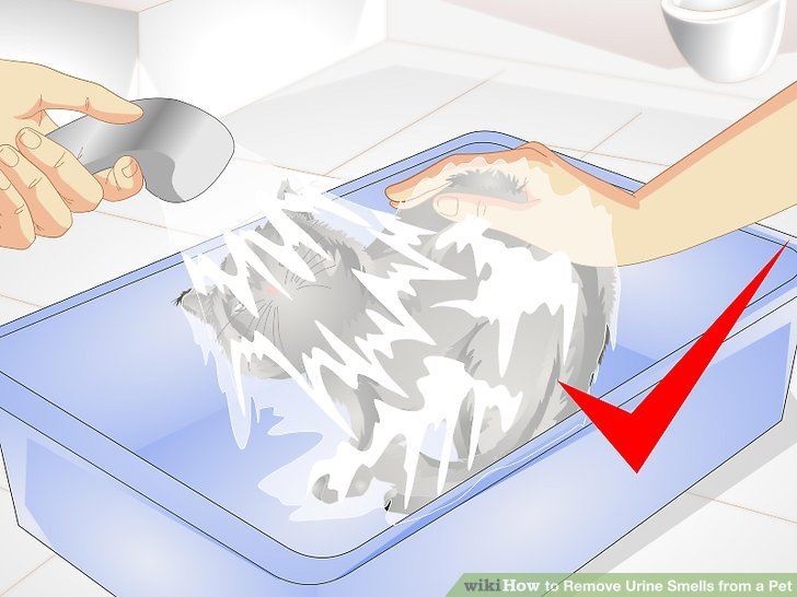 How To Remove Urine Smells From A Pet With Pictures